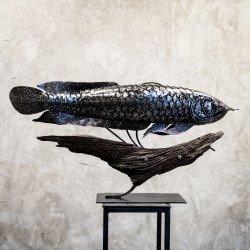 ปลา arowana เหล็ก